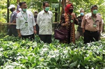 Mentan minta Provinsi Maluku bangun gudang beras sendiri