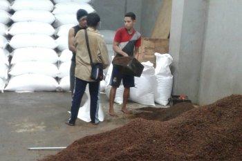 Harga cengkih di Kota  Ambon  turun