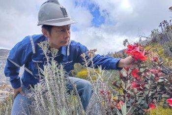 Freeport temukan satu spesies tumbuhan baru di Papua