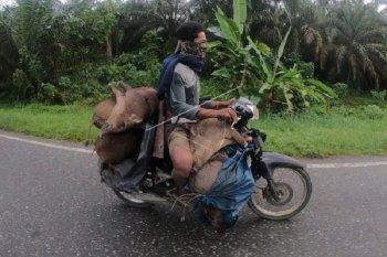 Orang Rimba di Merangin bersepeda motor membawa hasil buruan