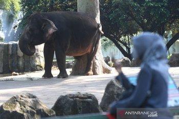 Taman Wisata Ragunan ditutup kembali mulai 14 September