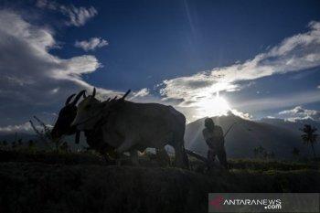 Intensifikasi lahan pertanian