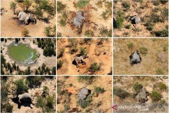 Botswana masih selidiki kematian misterius 275 ekor  gajah