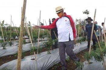 Pemprov Banten perkuat pertanian untuk pulihkan ekonomi