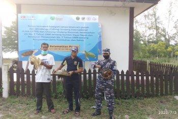 """Dua """"fosil hidup"""" di Sumatera Utara dilepas liarkan"""
