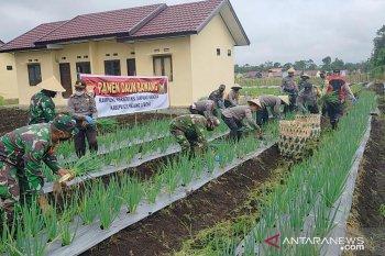 Polisi dan TNI di Rejang Lebong panen raya daun bawang