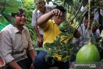 Pemkab Sukabumi gandeng pesantren kembangkan agribisnis jaga ketersediaan pangan