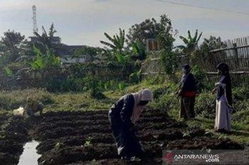 """Pemkot Bogor kembangkan """"urban farming"""" dengan manfaatkan lahan kosong sekitar rumah"""