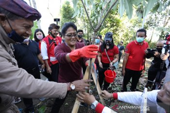 Pemkab Badung tanam pohon di kawasan Pura Pucak Tedung