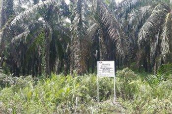 Lahan sawit Nurhadi yang disita KPK capai 530 hektare