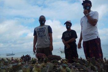 KPKHN berharap dukungan pemerintah untuk budidaya karang hias