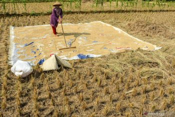 Report indicates government accelerated sustainable food production