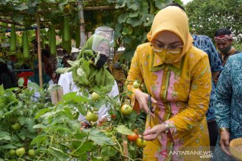 Ibu-ibu rumah tangga di Purwakarta diajak bercocok tanam di pekarangan rumah