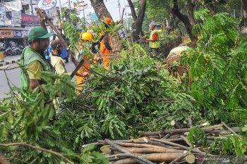 Jakarta Pusat lakukan pemangkasan 6.000 pohon