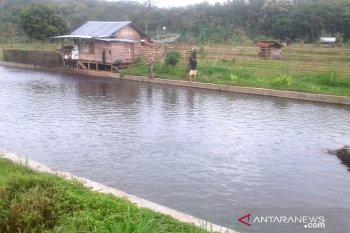 Petani ikan Desa Belumai Rejang Lebong keluhkan rendahnya harga jual