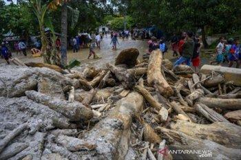 Tumpukan kayu timbun jalan akibat banjir bandang di Sigi