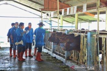 Mentan berencana perbanyak balai embrio dorong ternak sapi unggulan