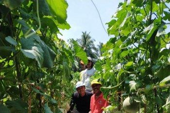 Distan Mukomuko dukung pengembangan tanaman melon