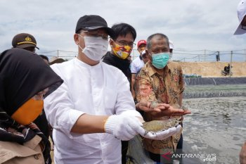 Udang vaname Bengkulu tembus pasar internasional