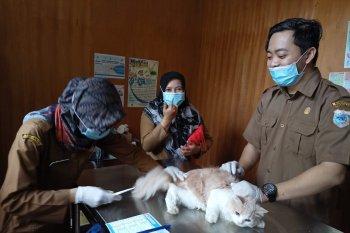 Hari Rabies sedunia, Puskeswan Pandeglang berikan vaksinasi rabies gratis