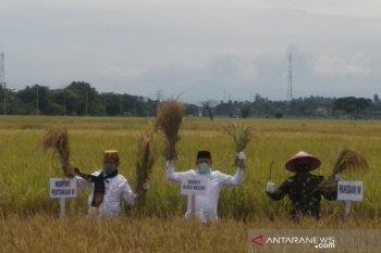 Menteri Pertanian panen raya di Aceh Besar
