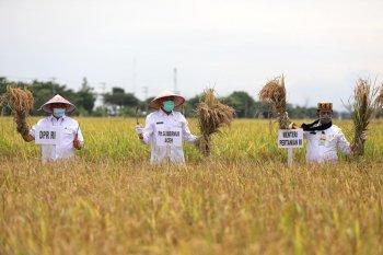 Aceh siap jaga program ketahanan pangan di tengah pandemi COVID-19