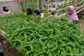 Borosnya pangan dan anjloknya daya saing Indonesia