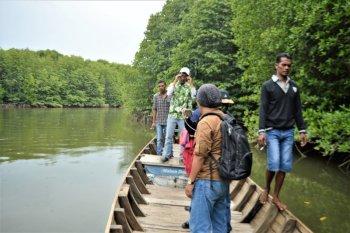 Menaksir Potensi Ekowisata Mangrove Kawasan Teluk Aru