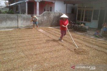 Harga biji kopi asalan Rejang Lebong stabil