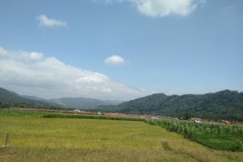 Jaga ketahanan pangan, Pemkab Purwakarta gulirkan program perluasan areal tanam baru