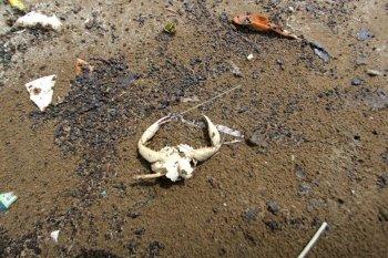 Ceceran Minyak Mentah di Pantai