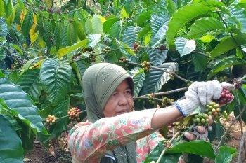 Volume resi gudang kopi naik 215 persen pada  kuartal III 2020