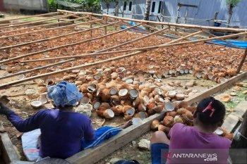 Anggota DPR ingatkan antisipasi kebijakan rencana pelarangan ekspor kelapa bulat