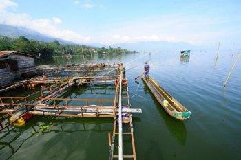Temuan spesies ikan di Danau Kerinci menurun