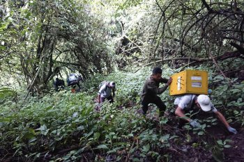 Usai karantina,  tujuh ekor lutung Jawa dilepasliarkan ke habitatnya