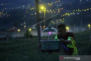 Penggunaan lampu pengendali hama di Enrekang