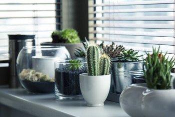 Sekedar taruh tanaman di dalam rumah saja sudah bermanfaat untuk Anda