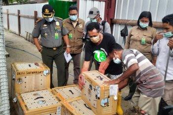 45 ekor unggas liar ditranslokasikan ke Balai KSDA Maluku