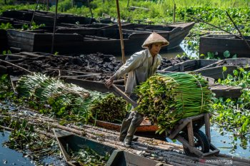 Mengupayakan penyelamatan ekosistem danau kritis Indonesia