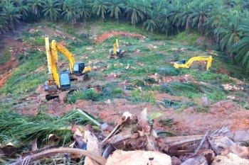 Lahan sawit produksi rendah di Paser akan diganti tanaman jagung