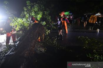 Pohon Tumbang Akibat Cuaca Buruk di Palu