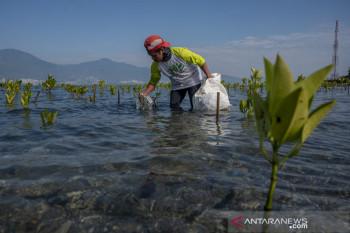 Aksi Pungut Sampah Plastik di Pantai