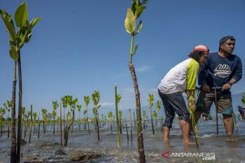 Peringatan Hari Konservasi Mangrove Internasional di Palu