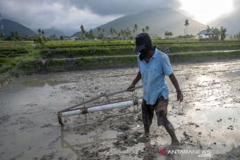 Daya serap sektor pertanian atas KUR