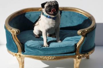 """Seekor anjing jadi sorotan di penayangan perdana film """"Patrick"""""""