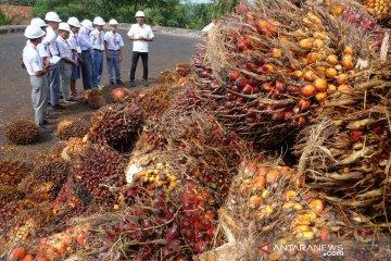SMN kunjungi pabrik kelapa sawit PTPN IV