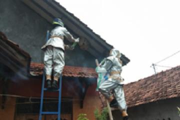 Peneliti: Sarang tawon vespa pindah rumah warga karena habitat hilang