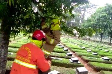 Petugas Damkar Jaktim evakuasi sarang tawon di kuburan