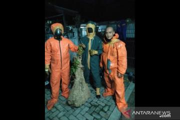 Damkar evakuasi dua sarang tawon vespa di Jakarta Barat