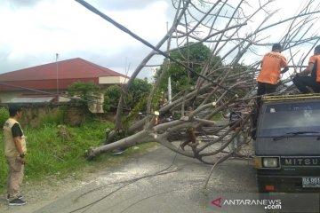 Pohon tumbang timpa mobil dan robohkan tiang listrik di Padang